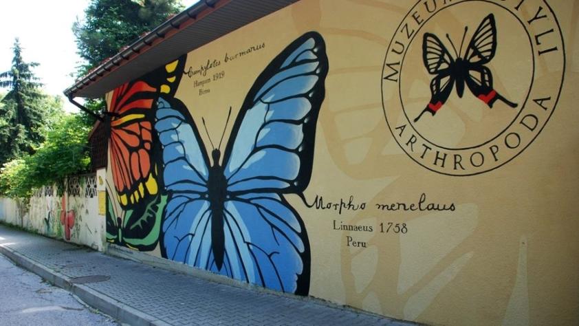 Muzeum Motyli w Bochni